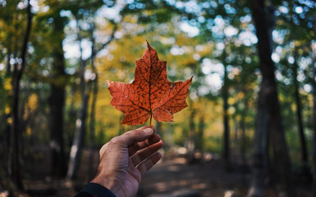 Canada Ranked #1 in Quality of Life